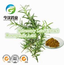Rosemary   Extract   Rosmarinic   Acid