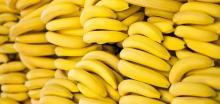 Fresh Yellow Banana for Sale ..