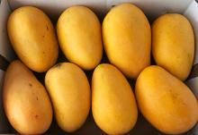 Fresh natural fruit class 1 Hotsale cheapest price yellow mangoes.