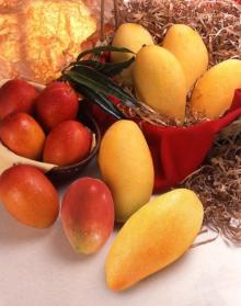 Fruits and vegetables-fresh mango from Taiwan.