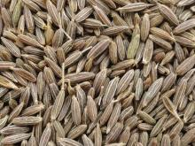 Premium Quality Pure Whole Cumin Seeds, Spices