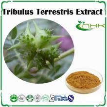 Manufacture supply tribulus terrestris extract