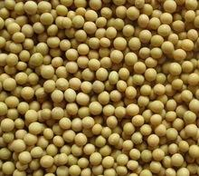 Kidney Beans,Soybeans and Soyabeans Milk Available