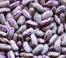 Long Shape Light Speckled Kidney Beans