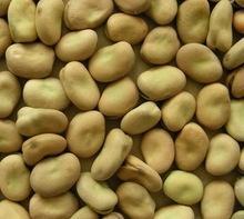 Best Quality Faba Beans wholesale