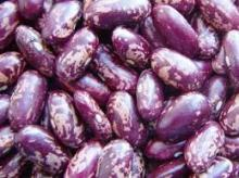 High Quality Organic Purple Speckled Kidney Beans