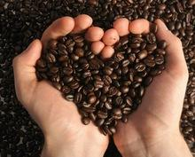 >>Best price<< Robusta Coffee Bean (Roasted)