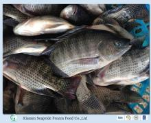 Hot Sale Frozen Tilapia Whole Round