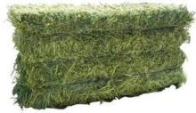 Alfalfa Animal Feed