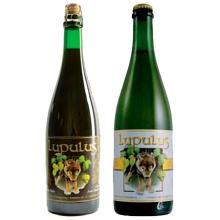 Beer Lupulus