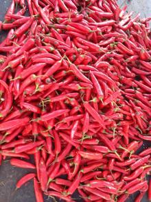 овощи нового урожая  IQF   красный   перец , замороженный сладкий  перец
