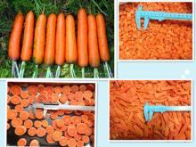 new crop 2016 Frozen Carrot Dice, Slice, IQF Carrot