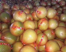 2016 New crop Chinese Fresh Honey Pomelo, fresh grapefruits, shaddock, honey pummelo, pomelu