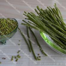 Organic quick cooking mung bean fettuccine pasta