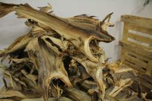 Dry anchovy stock fish,dry stock fish