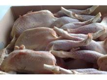 Frozen fresh Halal chicken meat boneless skinless