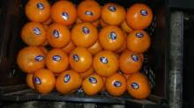 Fresh Oranges (Valencia and Navel), Citrus Fruits.