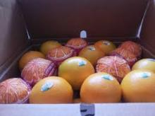 fresh valencia oranges for sale/Fresh Orange, Naval Orange, Valencia Oranges