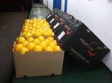 Fresh Valencia Orange and Other Citrus Fruits At Competitive Prices