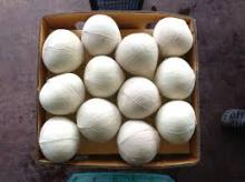 Fresh Young Coconut from Thailand Semi-Husk / Diamond Shape Export Grade suitable