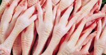 Best Grade Halal Certified Frozen Chicken Paws from Brazil