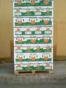 Hot selling fresh valencia orange with high quality