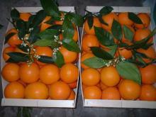 Fresh Valencia orange for sale