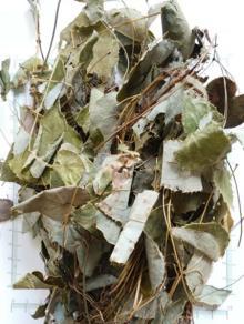 Epimedium Leaf Herb Powder,Horny Goat Weed leaf Herb Powder,Epimedium Leaf Milling Powder