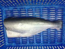 Frozen hgt pangasius fish