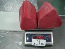 Yellowfin tuna loin co treated