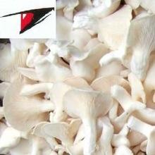 White oyster mushroom in brine