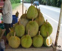 Fresh Durian available for sale 2016 Harvest
