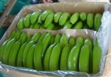 CLASS A FRESH GREEN CAVENDISH BANANA FOR SALE