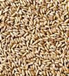 Brown oats manufacturers prices