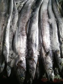Frozen Hairtail / Ribbonfish 1/2, 2/3, 3/4, 5/7, 7/10 /kg sizes Hook Line Caught