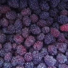 Freeze Dried Blackberry for sale