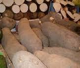 Top Quality white yam, best price