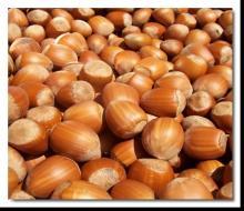 Best choice Hazel nuts