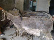 Donkey Hides