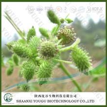 China Tribulus Terrestris Extract Saponins manufacturer