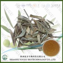 China Olive Leaf Extract 8%~40% Oleuropein; 5%~40%  Hydroxytyrosol  factory
