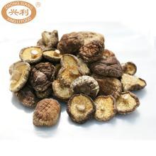 Premium Autumn Brown Dark Surface 5.0 - 5.5 cm Cap Completely Curling Rim Stem Cut Shiitake Mushroom