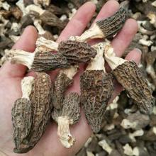 Factory Price Premium Chinese Cultivated Dried Morel Mushroom with Stem 2CM