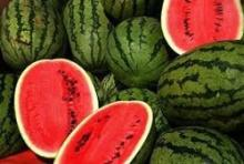 Fresh water melon fruits WHOLESALE