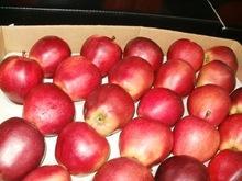Fresh Fuji Apple fruits for sale