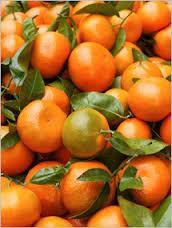 Fresh Mandarin Orange Citrus Fruit for sale