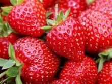 WholesaIe IQF/Frozen bulk Strawberry whole Grade A new crop