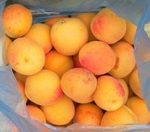 Fresh apricot, Organic Fresh apricot, Fresh Apricot fruit for sale.