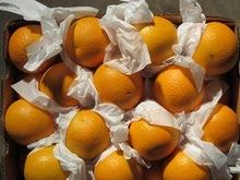 Fresh Naval and Valencia Oranges,Navel Valencia Oranges,Valencia Oranges for sale