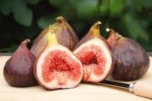 WholesaIe Fresh Fig fruits
